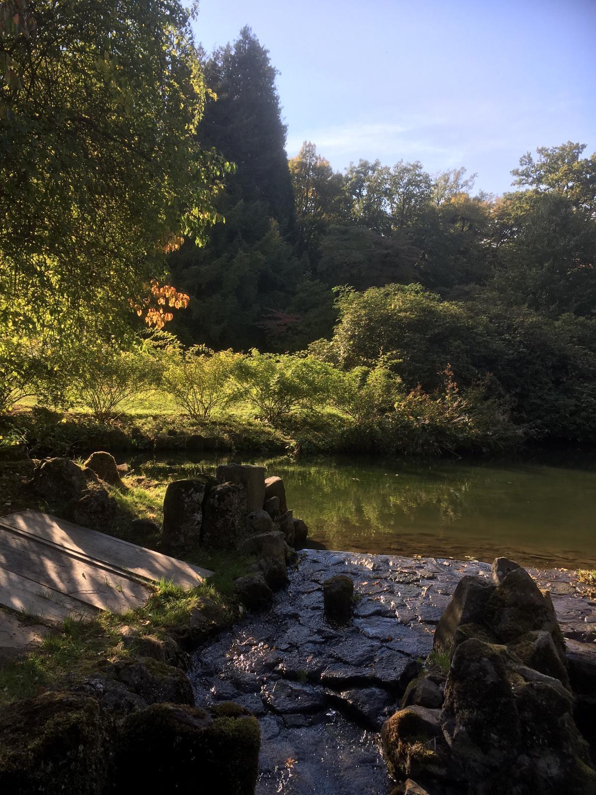 Sonne scheint im Bergpark Wilhelmshöhe auf Pflanzen und einen kleinen Wasserfall